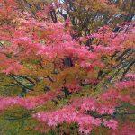 常陸太田市「西山荘」の紅葉