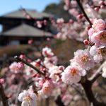 水戸の梅と偕楽園