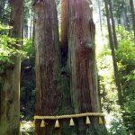 パワースポット、日立市御岩神社の三本杉